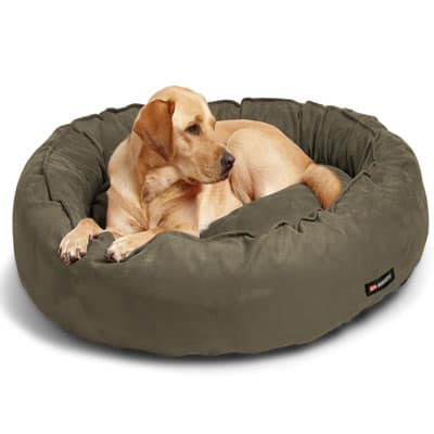 Dog Bed Amazon